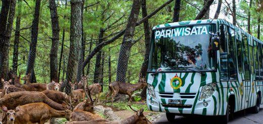 Pakej Percutian Surabaya Bromo Taman Safari