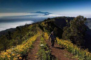 Flower Hill Gunung Bromo Surabaya
