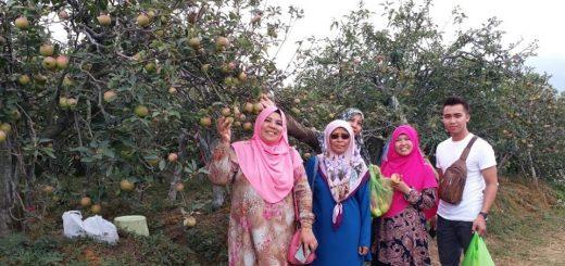 Pelbagai Jenis Buah Epal Di Pasuruan